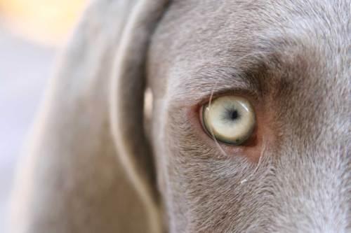 右目の黒点
